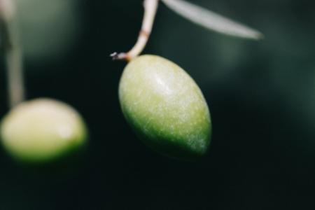 Bio natives Koroneiki-Olivenöl extra 5L von OEL-Berlin