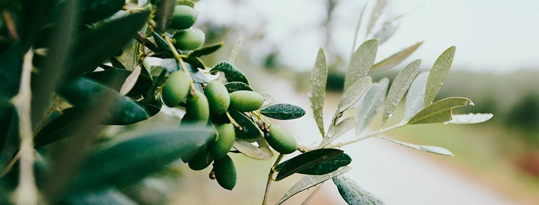 Olivenöl kaufen bei Leni & Hans