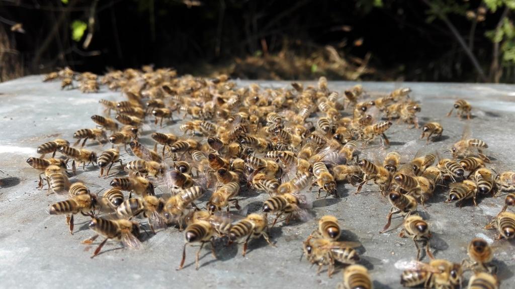 Bienen von Summ SUMM Honighandel
