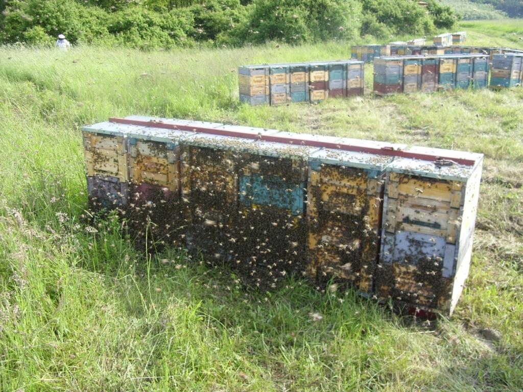 Bienenkästen von Summ SUMM Honighandel