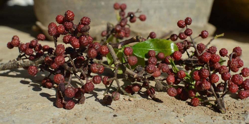 Rote Pfefferbeeren von Pure Pepper