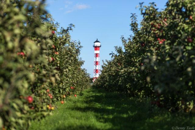 Apfelplantagen mit Leuchtturm von Altländer Genuss