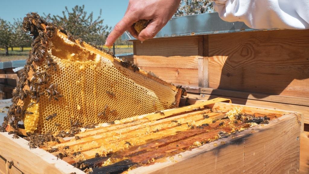 Bienenwaben von Honigprinz