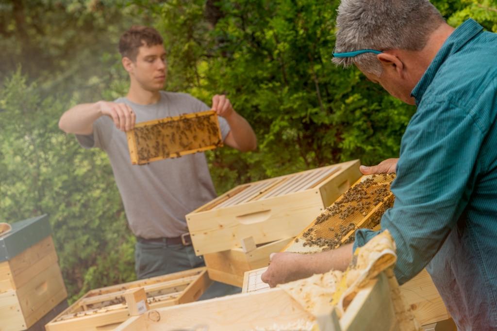 Imker von Kaiserhonig entnehmen Bienenkästen Waben