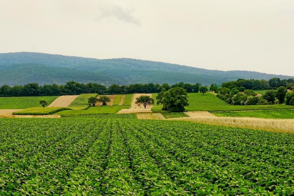 Felder in der Pfalz