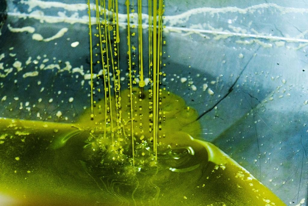 Frisches Olivenöl von Olio Costa strömt aus der Zentrifuge