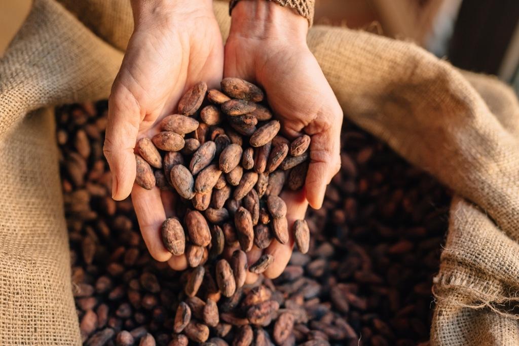 Kakao-Bohnen von Choco Del Sol