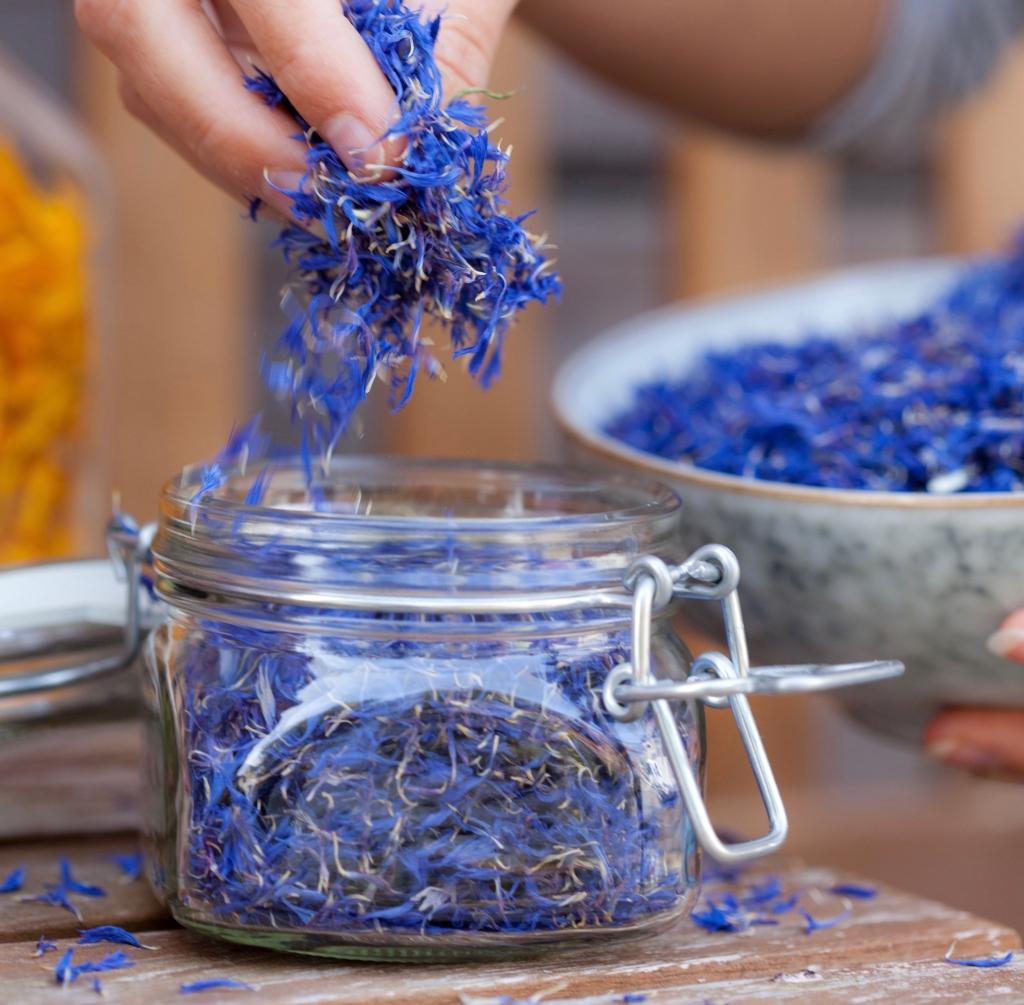 Blaue Blüten von Tante Fine im Glas