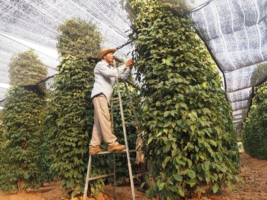 Uncle's Pepperfarm